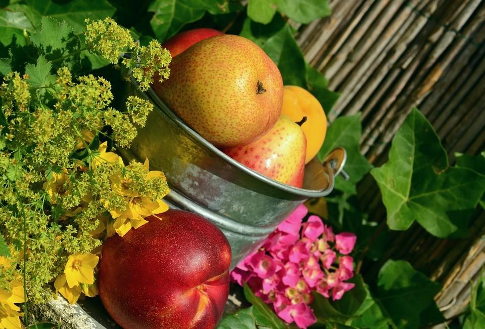 fruits 850491 960 720