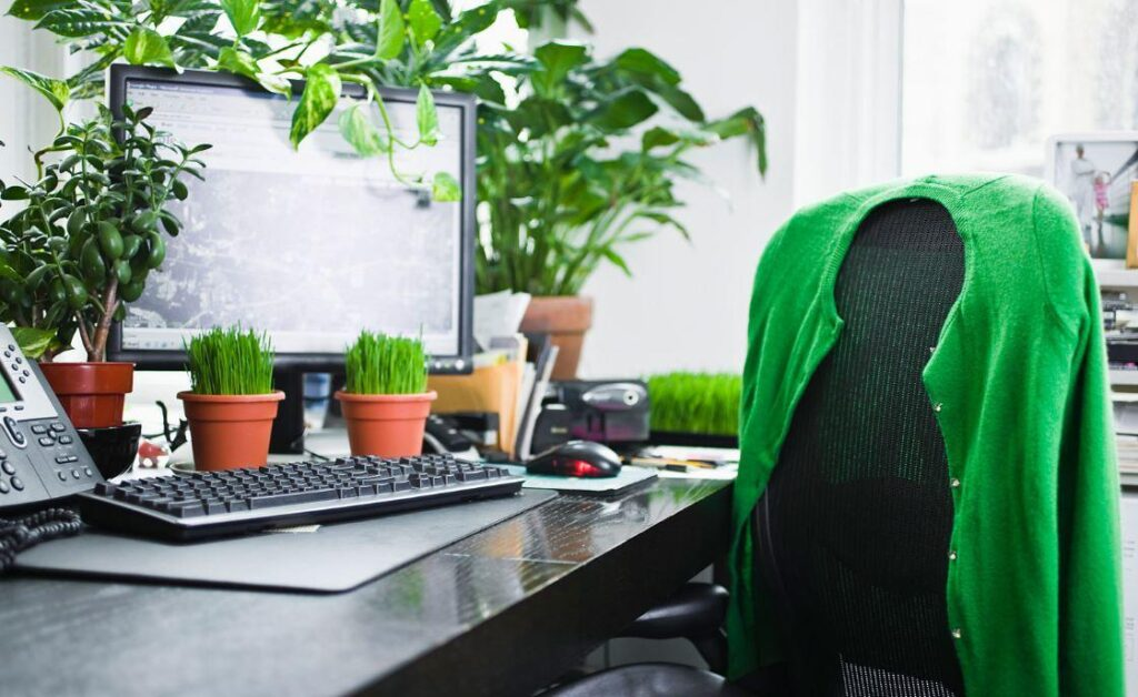 From Plants to Pets: How to Make a Business Office a Stress-Free Zone